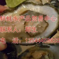 供应生蚝批发法国生蚝阳江