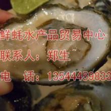 供应湛江郑记海鲜批发0