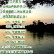 好商家网赘走杭州租植物-办公室租图片