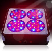 LED植物灯选深圳联邦植物生长灯图片