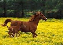 供应一匹马多少钱啊图片