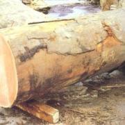 木材进口清关代理木材清关代理