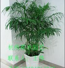 供应租观叶植物买花草买植物买盆