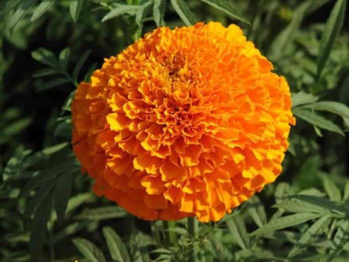 赤峰花源园艺