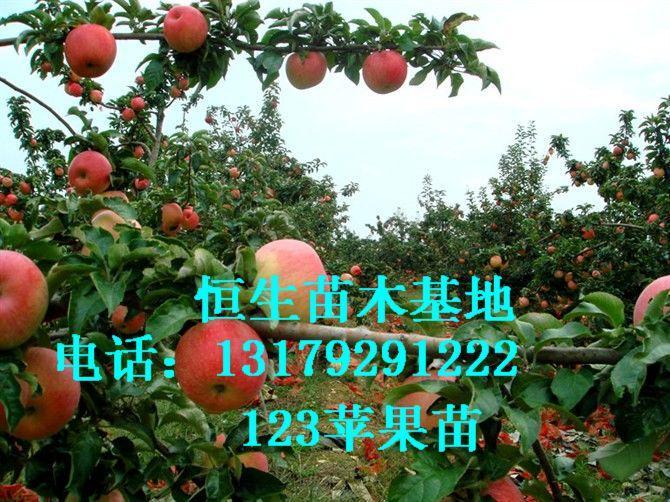 供应123果苗成品苗半成品苗辽宁恒生13179291222