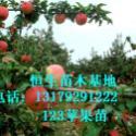 123果苗123苹果苗建果园推荐123果图片