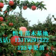 寒富苹果苗123苹果苗李子苗图片