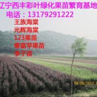 供应EMS寒富苹果苗Θ123苹果苗Θ123果苗价格