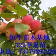 123果苗123果树苗123苹果苗图片