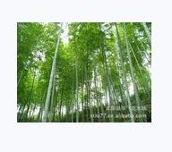 供应竹材图片