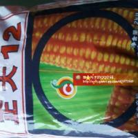 供应正大12玉米种子