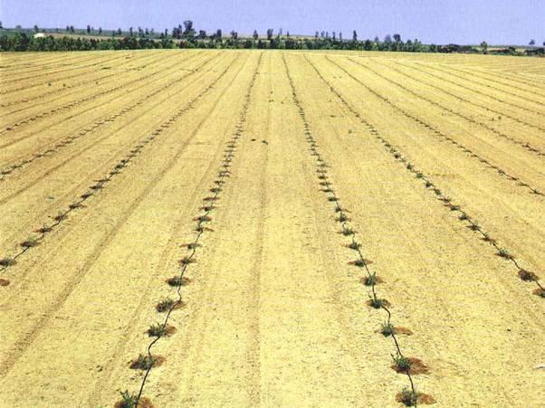 供应河南滴灌带价格河南节水灌溉