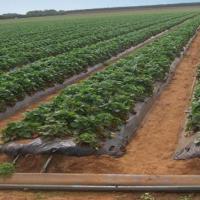供应河南农产品节水滴灌设备16mm滴灌带