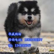 广州哪里有狗场卖狗图片