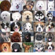 佛山什么地方有卖宠物狗图片