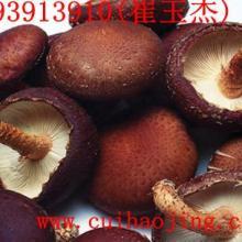 供应康县特色香菇
