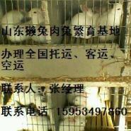 中国肉兔网肉兔的营养比利时肉图片