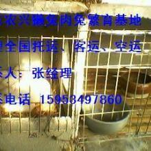 肉兔的利润#肉兔养殖项目#重庆肉兔养殖场#浙江肉兔 肉兔的利润肉图片