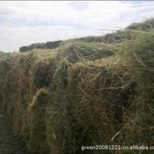 供应优质青干草