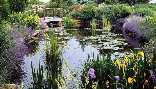 供应生物景观水体控藻剂