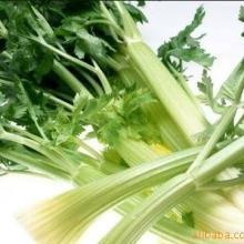 供应新鲜蔬菜粮油配送