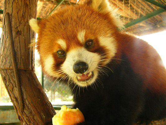 供应九峰森林动物园国庆黄金周节目单