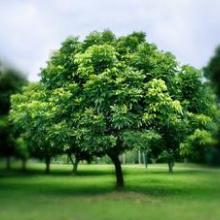 供应灌木种子