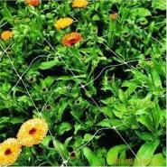 植物支架网图片