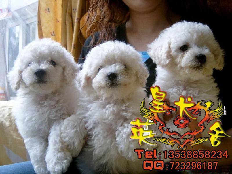 世上最可爱的小狗图片 世上最可怜的小狗 世上最丑的小狗图片