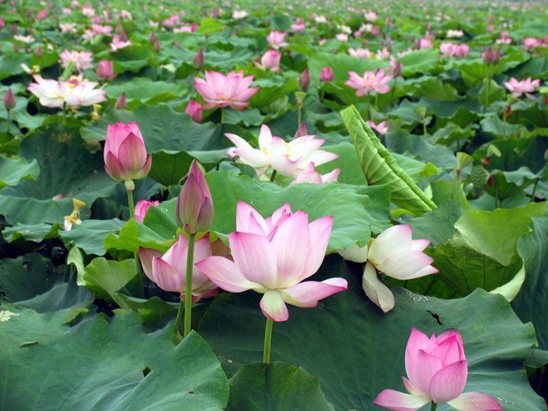 鑫园水生花卉种植有限公司