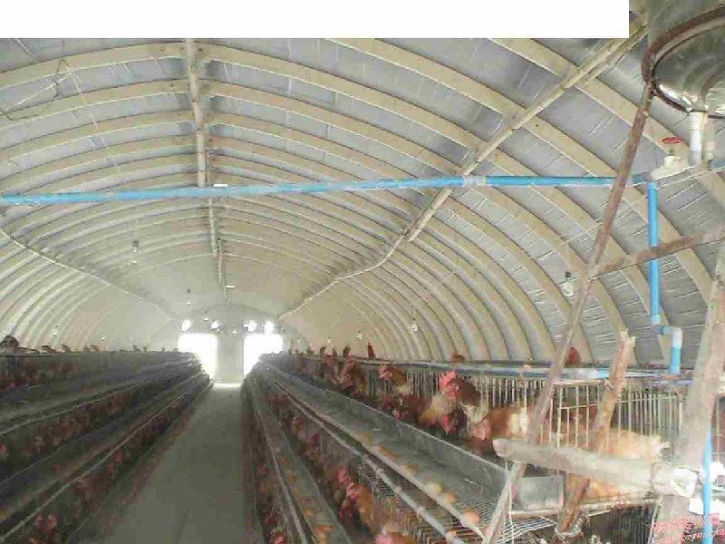 建oo0蛋鸡舍用保温材质需多少钱_