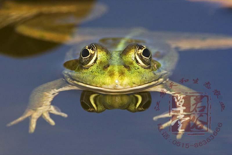 蟾蜍 青蛙 蝌蚪的区别是什么