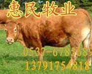 现在肉牛价格是多少波尔山羊价格图片