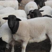 肉牛羊驴草料