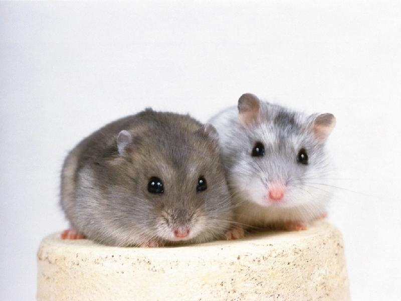 胎卵生动物图片