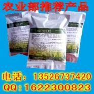 秸秆发酵剂发酵玉米秸秆喂羊图片