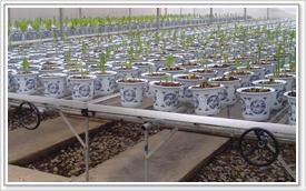 供应广西花卉展览架价格