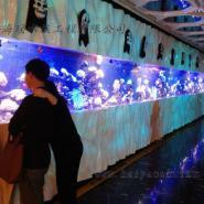 供应北京大型鱼缸|大型亚克力鱼缸|大型鱼缸厂家