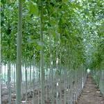 金林果品苗木