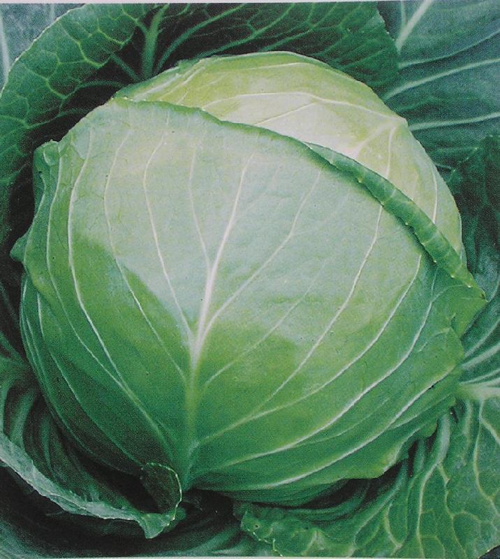 玉田老张蔬菜果品购销站