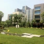 上海城市绿化常用树种图片