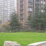 供应上海一级绿化养护标准