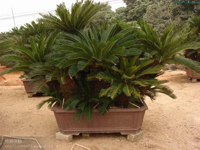 供应上海室内绿化服务公司、办公室摆放植物的好处