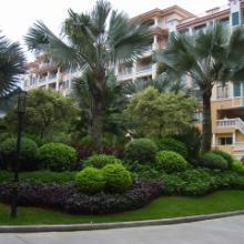 浦东绿化工程绿化工程公司