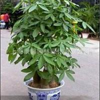 上海植物租赁上海康馨园林