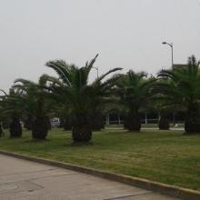 供应绿化养护工程/绿化养护工程价格/上海绿化养护工程