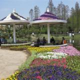 上海康馨园林上海专业绿化工程