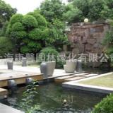 供应上海工厂绿化养护,上海屋顶绿化养护