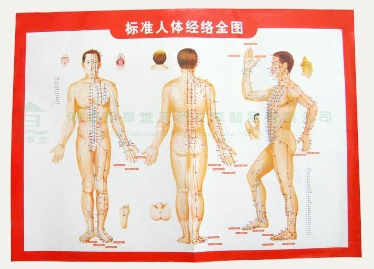 人体经络图穴位图附常用病例施灸图片|人体经