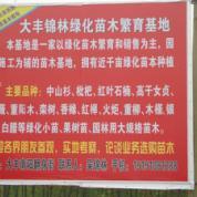 盐城市大丰区南阳镇锦林花木专业合作社简介